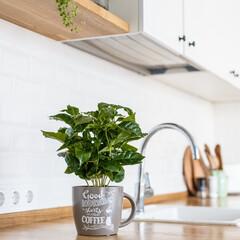 スターフィルター/換気扇/掃除/時短/フィルター 白い壁に爽やかなグリーンの植物。キッチン…