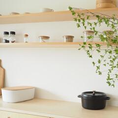 スターフィルター/キッチン/掃除/時短/家事/コンロ周り/... 綺麗なキッチンには植物が似合いますよね。…