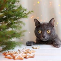 スターフィルター/キッチン/猫/大掃除 キッチンにやってきた猫ちゃん。  クリス…