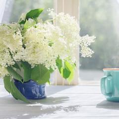 スターフィルター/キッチン/お花/換気扇掃除/時短/暮らし/... お花を飾って、キッチン䛾お掃除もして、 …