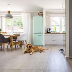 スターフィルター/換気扇/フィルター/ワンちゃん/愛犬/健康/... キッチンでのんびり過ごすワンちゃん。 大…