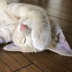 寝顔に癒される/寝顔/LIMIAペット同好会/フォロー大歓迎/ペット仲間募集/猫/...