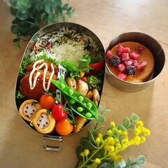 アルモンデ弁当/シーガル/シーガル弁当/お弁当作り/おべんとう/春弁当/... 冷蔵庫にあるもの、とにかく詰めた アルモ…