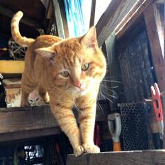 猫派/にゃんこ同好会 先日投稿した猫くんのお兄様(的存在)。 …