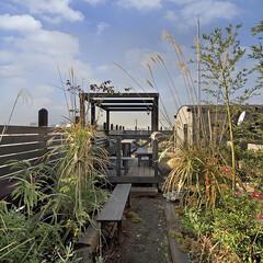 自然土/植栽/植樹/里山/バウビオロギー/ビオトープ/... 屋上は自然土で築山や池をつくり、日本の里…
