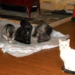 フォロー大歓迎/不動産・住宅/工務店/猫/猫と暮らす/子猫/... エルハウスで家を建てられたOBさんからの…