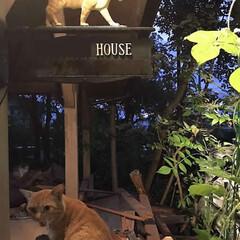 フォロー大歓迎/住まい/不動産・住宅/工務店/猫/猫と暮らす/... こんにちは!長野県の工務店「エルハウス」…