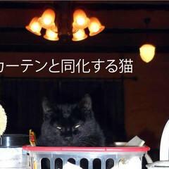 フォロー大歓迎/不動産・住宅/工務店/住まい/猫/猫と暮らす/... 【黒いカーテンと同化する猫】エルハウスO…