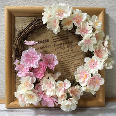 桜/リース/ひな祭り/ピンク/キャンドゥ/ダイソー/... 桜のリース🌸 まだ、土手の桜の蕾はおやす…