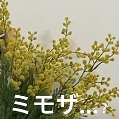 ミモザ/サンキ/造花/雑貨 今年は、フェイクのミモザ😭🤧😷 近くのお…