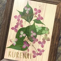 押し花/山紫陽花/100均/ダイソー/季節インテリア/七夕飾り/... 今年の山紫陽花の押し花は、結局シンプルに…