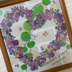 ハートリース/押し花/紫陽花/押し花アート/令和の一枚/至福のひととき/... 紫陽花の押し花アート パープル、ピンク系…