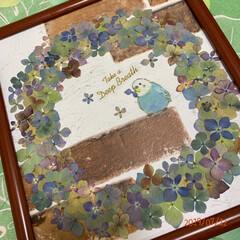 リース/押し花/紫陽花/令和の一枚/至福のひととき/LIMIAインテリア部/... 紫陽花の押し花リース💕 先日、生のお花で…