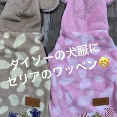 ワッペン/犬服/ダイソー/セリア 同じサイズなのに、コタに着せたら、丈短い…