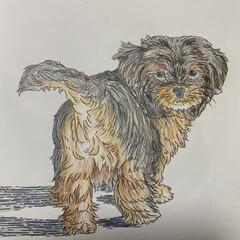 チワプー/ペット/イヌのぬり絵/雑貨/犬 先日のイヌのぬり絵❣️ マルチーズが、チ…