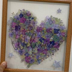 ハート/押し花/紫陽花/押し花アート/令和の一枚/至福のひととき/... フレームの裏板をプラ板にして、紫陽花の押…