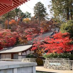 紅葉/おでかけ 2匹と散歩行って来ました。 紅葉綺麗だっ…