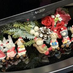 クリスマス/スワッグ/トールペイント/ダイソー/セリア/キャンドゥ/... テレビの下に、クリスマススワッグと動物達…(1枚目)