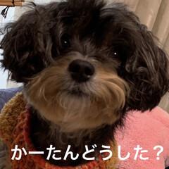 花粉症/ヨーキー/チワプー/犬/ペット 2月17日 朝からいい天気…でも、目に花…
