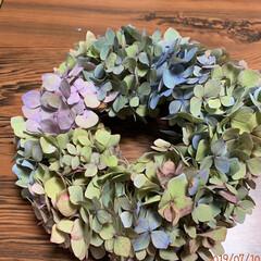 押し花/紫陽花/リース/令和の一枚/至福のひととき/LIMIAインテリア部/... 本物の紫陽花リース… 今日は、実家までチ…