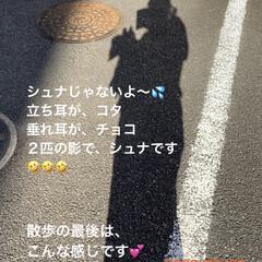散歩/影絵/チワプー/ヨーキー/ペット/犬 今朝は、ちゃんと散歩して来ました。 東京…