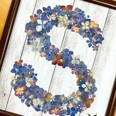 押し花アート/紫陽花/ダイソー/100均/雑貨/ハンドメイド 紫陽花の押し花アートも、今年初めて作りま…