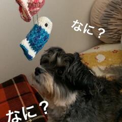 チワプー/ペット/犬/マスコット/こいのぼり/手編み/... またまた手編みのこいのぼりマスコット🎏 …