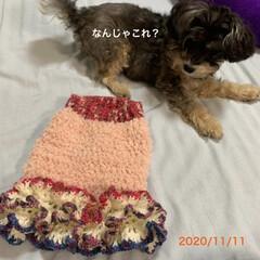 手編み/チワプー/ペット/犬/犬服/キャンドゥ/... おはようございます☀ 先日のチョコ服、再…