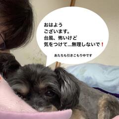 ペット/チワプー/犬 おはようございます🐶🐶 東京も雨〜☔️ …(1枚目)