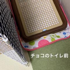 タイルマット タイルカーペット 吸着 床暖房対応 撥水タイルマット 無地 8枚入 30×30cm おくだけ吸着 サンコー(カーペット、マット)を使ったクチコミ「モニターキャンペーンの撥水タイルマットと…」(3枚目)