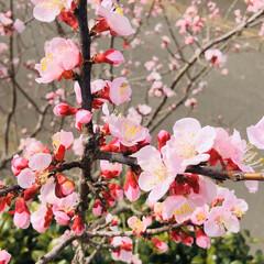 ピンク 庭の花咲きました🤗