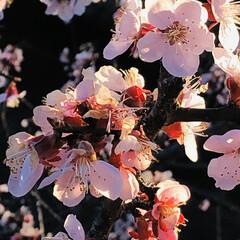 ピンク 庭の花🌸😉