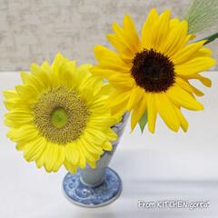 ひまわり/お花/お見舞い/メッセージ嬉しかったです/ありがとうございます/ばろんちゃん/... 五色そうめん🎐とお礼🙇♀️🙇🙇♂️ …(3枚目)