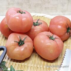 TOMIZ/富澤商店/パン作り好きな人と繋がりたい/パン作り/料理好きな人と繋がりたい/栃木県産トマト/... 栃木産トマトdeブルスケッタ🍅  こ…(3枚目)