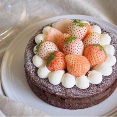 淡雪/ガトーショコラ/わたしのごはん/パールホワイト/誕生日ケーキ/手作りケーキ かわいい苺のセットを見つけたので♡