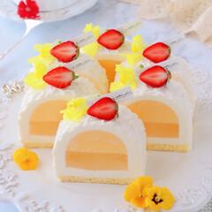 萌え断/cheesecake/Cafe/sweets/cake/LEMON/... 🍋レモンチーズケーキ  前回のカットve…(1枚目)