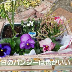 DAIKI/園芸/お花の買いもの🌹 今日は雨🌂30%の確率だけど、 まだお天…