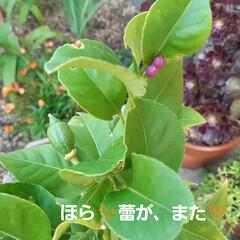 朝の庭 この花の名前は(  -_・)? お手入れ…(6枚目)
