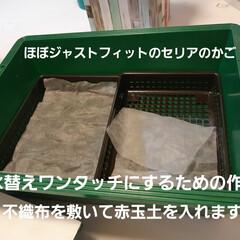 可動式メダカの水槽 大工仕事は大雑把だけど、何とか形になりま…(1枚目)