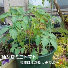 朝の庭 この花の名前は(  -_・)? お手入れ…(2枚目)