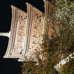 去年の思い出 昨年11月当時の東寺~🤣 残念ながら夜の…