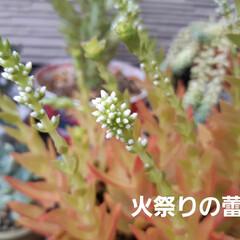 「虫シリーズ~🎶 今年はカメムシと蝉が少な…」(5枚目)
