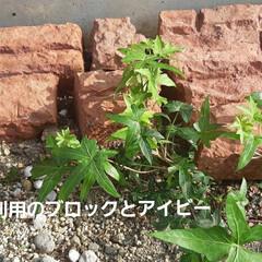 「元敷地の控えたスペースに、ミニ花壇。 こ…」(1枚目)