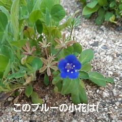 朝の庭 この花の名前は(  -_・)? お手入れ…(1枚目)