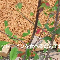 「虫シリーズ~🎶 今年はカメムシと蝉が少な…」(3枚目)
