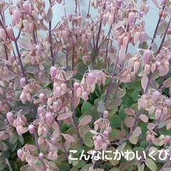 蘭くんの小さなお庭/多肉植物  トゲ無し檸檬の苗、買いました~🥰 まだ…(3枚目)