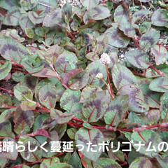 「虫シリーズ~🎶 今年はカメムシと蝉が少な…」(8枚目)