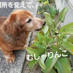 多肉植物/蘭くんのお庭散策🐶 3年くらいになるでしょうか(?_?) 蘭…(8枚目)
