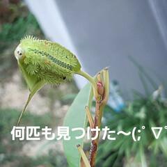 「虫シリーズ~🎶 今年はカメムシと蝉が少な…」(2枚目)