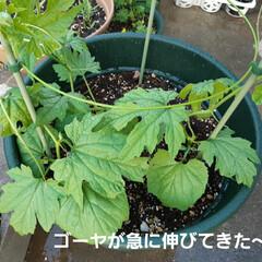朝の庭 この花の名前は(  -_・)? お手入れ…(3枚目)